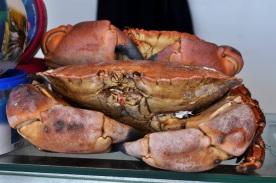 Crab Stare