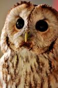 Flirty Owl