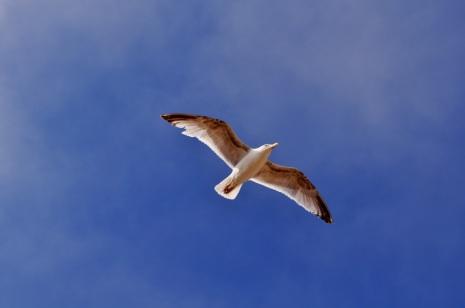 Free'za bird