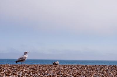 Gull Stones